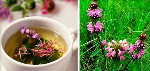 Чай на основе пустырника
