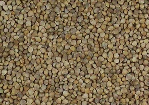Семена шпината для выращивания