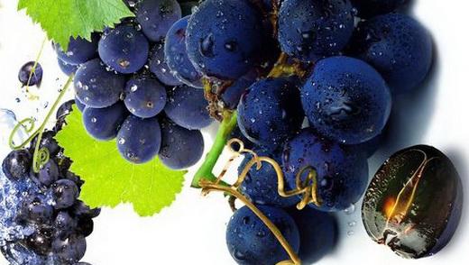 Виноград сорта Бастардо