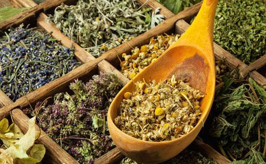 сохранение целебных свойств растений