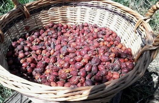 Сушеные ягоды боярышника