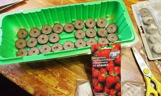 Выращивание рассады с помощью торфяных таблеток