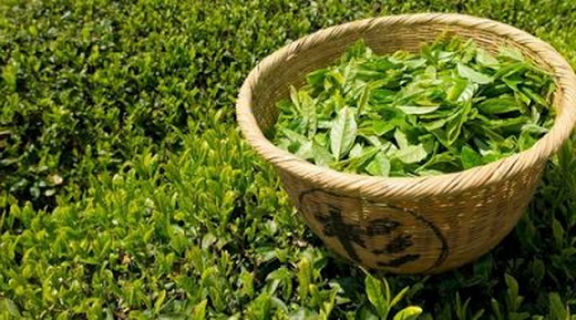 Польза листьев зеленого чая